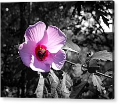 Flowering Acrylic Print