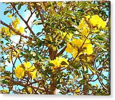 Flowering Tree Acrylic Print by Van Ness