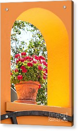 Acrylic Print featuring the photograph Flowerpot In A Mexican Wall by David Perry Lawrence