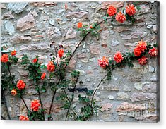 Acrylic Print featuring the photograph Flowers 5-assisi by Theresa Ramos-DuVon