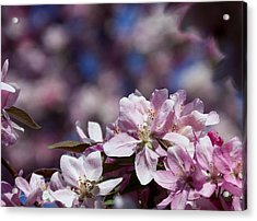 Flowers Acrylic Print by Adam L