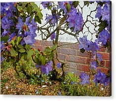 Flowers Against The Wall Acrylic Print by Lenore Senior and Constance Widen