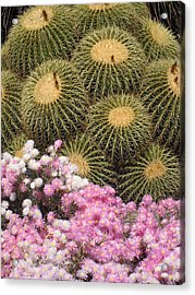 Flowers And Cacti Acrylic Print