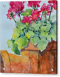 Flowers And Clay Pots Acrylic Print