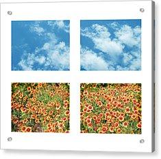 Flowers And Sky Acrylic Print by Ann Powell