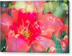 Flowers Bloom In Multiples Acrylic Print by Sonja Quintero