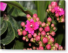 Acrylic Print featuring the photograph Flowers by Cyril Maza
