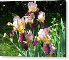 Acrylic Print featuring the photograph Flowers by Eric Switzer