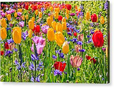 Flowers Everywhere Acrylic Print