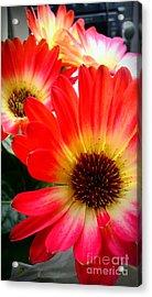 Flowers Fine Tuned Acrylic Print
