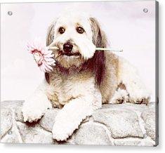 Flowers For My Best Friend. Acrylic Print by VRL Art