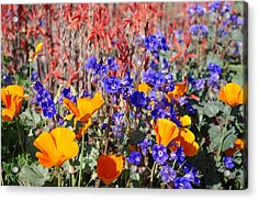 Flowers Gone Wild Acrylic Print by David Rizzo