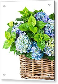 Flowers In Basket Acrylic Print by Boon Mee