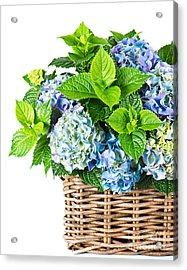 Flowers In Basket Acrylic Print