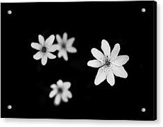 Flowers In Black Acrylic Print