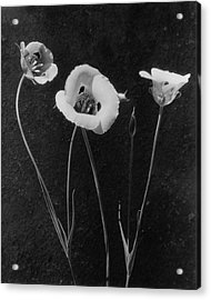 Flowers In Louise Beebe Wilder's Garden Acrylic Print