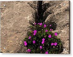 Flowers In Stone Acrylic Print