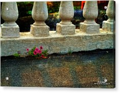 Flowers In The Cracks Acrylic Print by Dan Quam