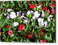 Flowers In The Garden At Villa Acrylic Print by Panoramic Images