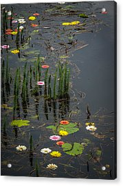 Flowers In The Markree Castle Moat Acrylic Print