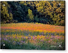 Flowers In The Meadow Acrylic Print by Deb Halloran