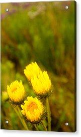 Flowers In The Wild Acrylic Print by Alistair Lyne