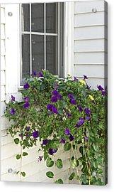 Flowers In Windowbox Acrylic Print