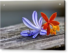 Flowers Of Blue And Orange Acrylic Print