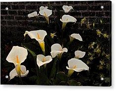 Flowers Of Ireland  Acrylic Print by Will Burlingham