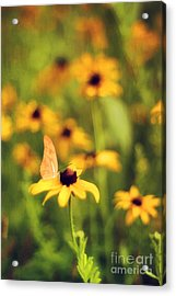 Flowers Of Summer Acrylic Print by Darren Fisher