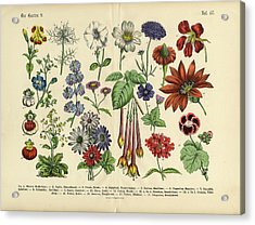 Flowers Of The Garden, Victorian Acrylic Print by Bauhaus1000