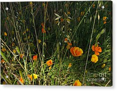 Flowers Of Wild  Acrylic Print by Tim Rice