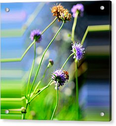 Flowers On Summer Meadow Acrylic Print by Tommytechno Sweden
