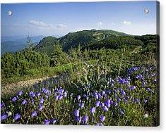 Flowers On Summer Mountain  Acrylic Print by Ioan Panaite