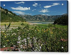 Flowers On The Palisades Resevoir Idaho Acrylic Print by Larry Moloney