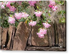 Acrylic Print featuring the photograph Flowers On The Wall by Juergen Klust