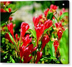 Flowers -  Red Beauties - Luther Fine Art Acrylic Print by Luther Fine Art