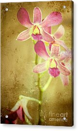 Flowers Acrylic Print by Sophie Vigneault