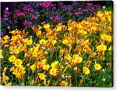 Acrylic Print featuring the photograph Flowers by Tim McCullough