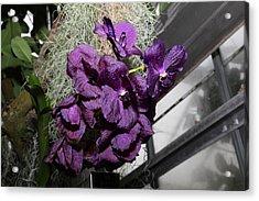 Flowers - Us Botanic Garden - 011313 Acrylic Print by DC Photographer