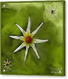 Flowers White Acrylic Print by Nedunseralathan R