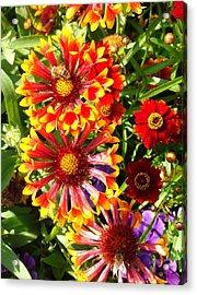 Flowers With Pollinators Acrylic Print by Van Ness
