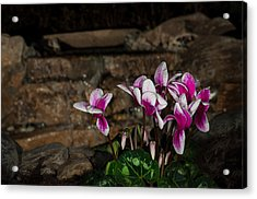 Flowers With Waterfall Backdrop Acrylic Print