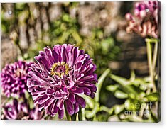 Flowery Sketches Acrylic Print