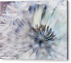 Fluffy Acrylic Print