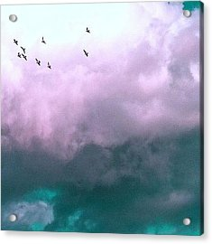 Fluffy Flight Acrylic Print