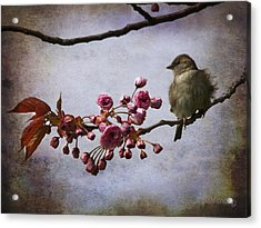 Fluffy Sparrow  Acrylic Print by Barbara Orenya