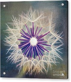 Fluffy Sun - 9bt2a Acrylic Print by Variance Collections