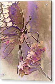 Fluorescent Butterfly Acrylic Print by Jill Balsam