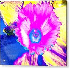Fluorescent Daffodil  Acrylic Print